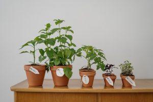 стайни растения и билки